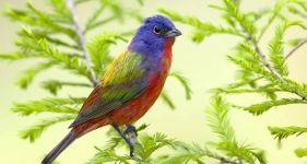 关于鸟的成语以及解释